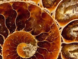 Золото и мёд | Ярмарка Мастеров - ручная работа, handmade