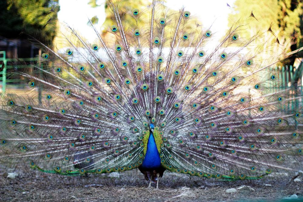 персональная запись, фотографии, прогулка по парку, фотограф, природа, птицы, фото, сочинский дендрарий