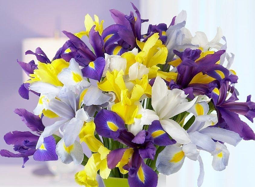 тюльпаны, весенний подарок