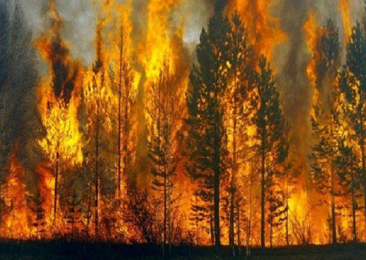 истории, история, родители, рассказ, мужчины, лес, огонь, пожар