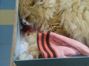 Давайте поможем спасти котика! | Ярмарка Мастеров - ручная работа, handmade