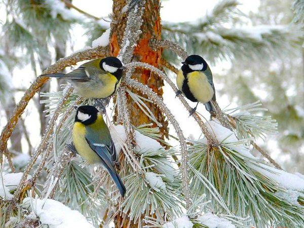 весна у нас не торопится, от горячего солнца не тает снег и все ровно много счастье от любви! | Ярмарка Мастеров - ручная работа, handmade