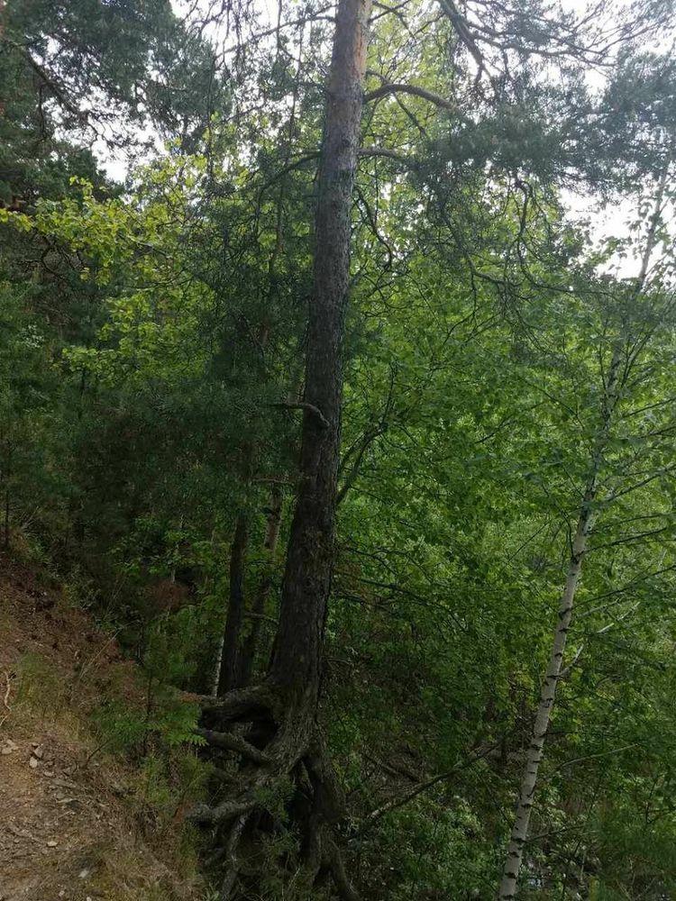 лес, картина