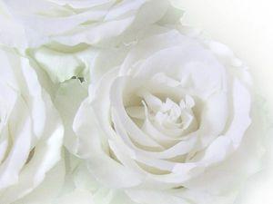 Белые розы фотокартина   Ярмарка Мастеров - ручная работа, handmade
