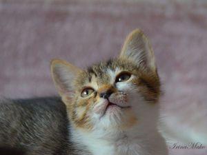 фотосессия котят | Ярмарка Мастеров - ручная работа, handmade