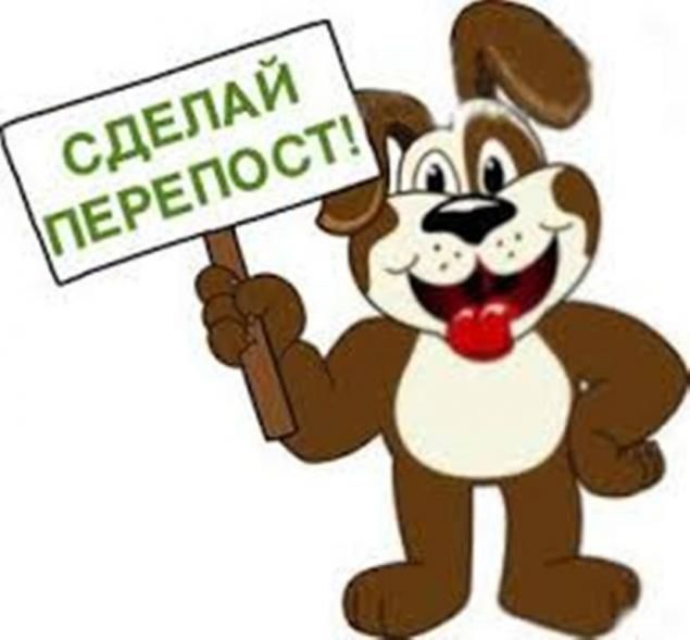 помощь собаке, помощь животным, нужна помощь, приют для животных, никифор кожухово, передержка для никифора