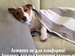 Зачем собачке лежанка? лежанка не для комфорта!. Ярмарка Мастеров - ручная работа, handmade.