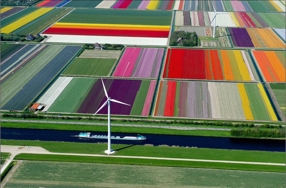 Поля из Тюльпанов в Нидерландах и еще 10 потрясающих фотографий., фото № 1