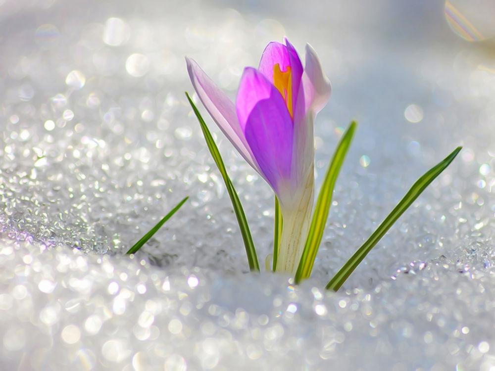 аукцион сегодня, аукцион, весенняя акция, весеннее настроение, весна