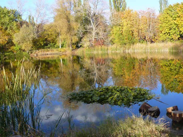 природа, отражение