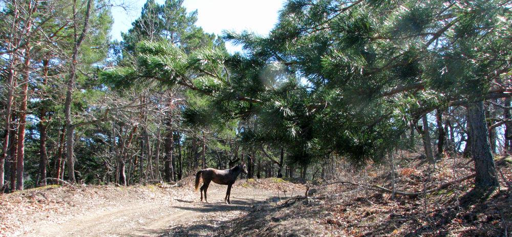 картины лошадей