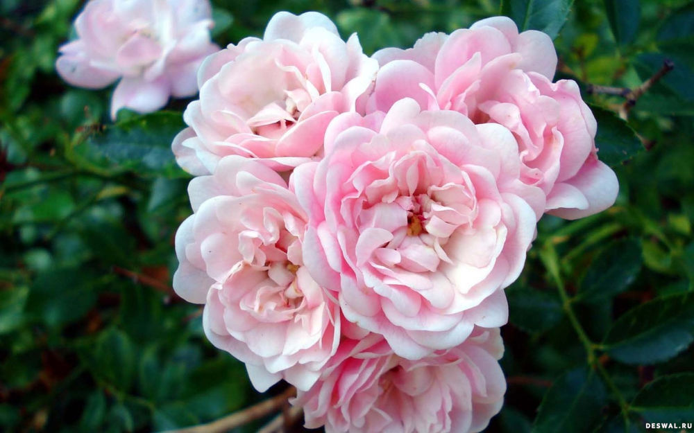Что говорят цветы.....!!!!, фото № 8