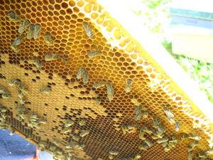 Отводки: новая пчелиная семья. Ярмарка Мастеров - ручная работа, handmade.