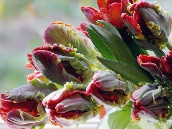 Аранжировки из свежих цветов к 8 марта. | Ярмарка Мастеров - ручная работа, handmade