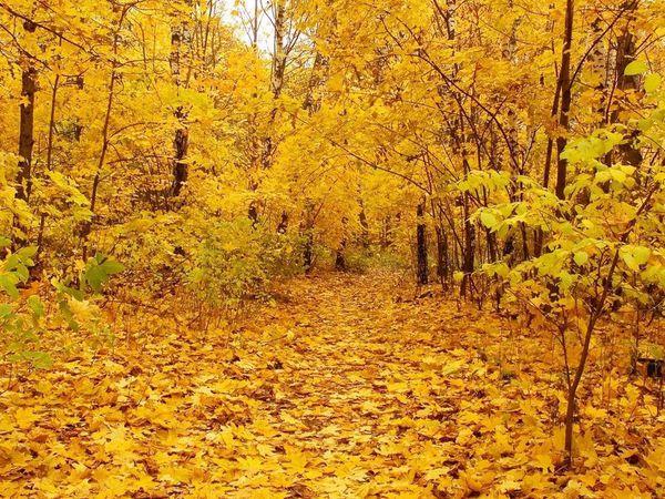 30/09 - последний день Акции! Золотая осень!   Ярмарка Мастеров - ручная работа, handmade