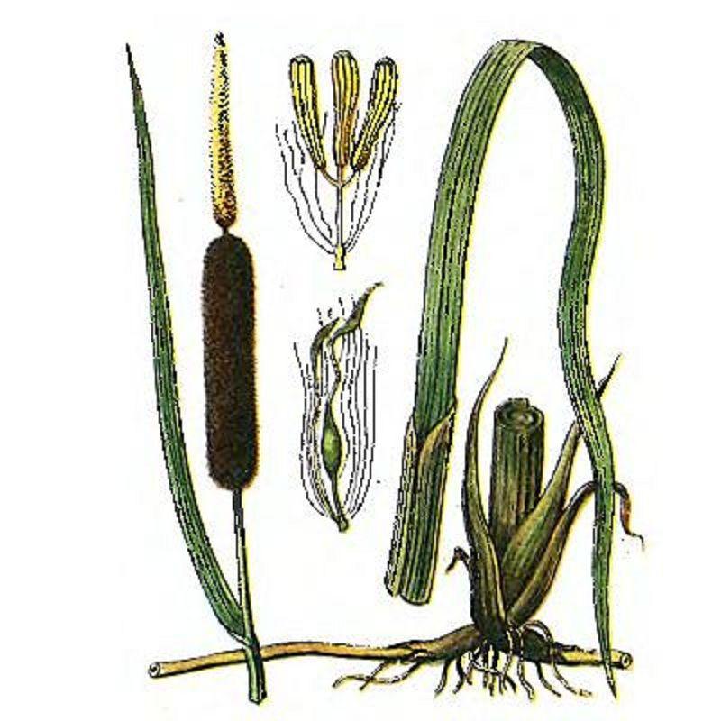 плетение из рогоза