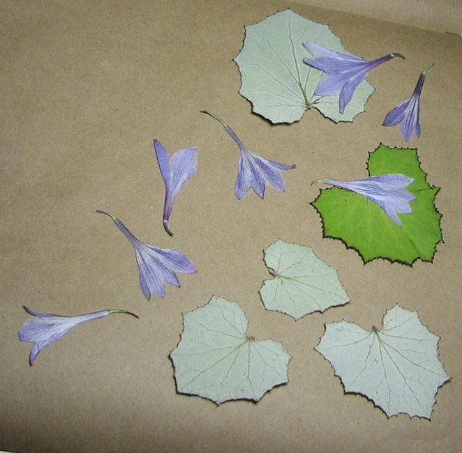 как собирать гербарий