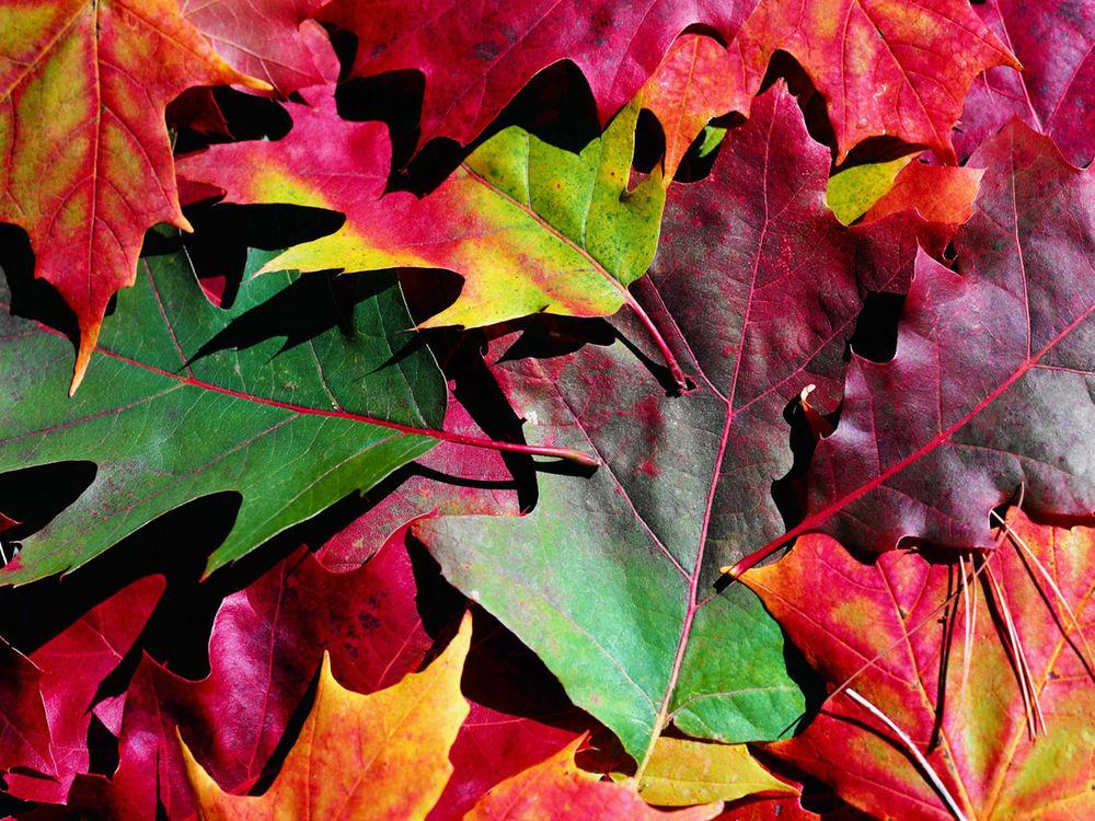 листья из войлока