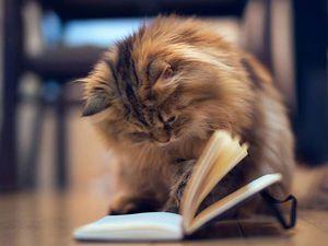А у нас - выставка кошек!!! | Ярмарка Мастеров - ручная работа, handmade
