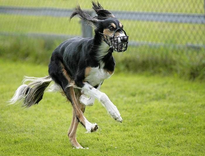 собака, кличка, плохое поведение собаки, собака убегает, собака глупая, не слушается на улице, тузик, поводок, команда рядом, ко мне