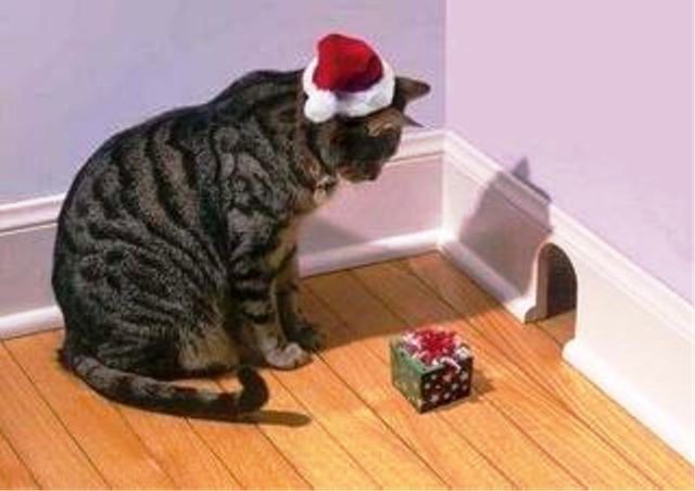 Christmas Cats! And a Little About the Safety of Pets During the Holidays, фото № 13