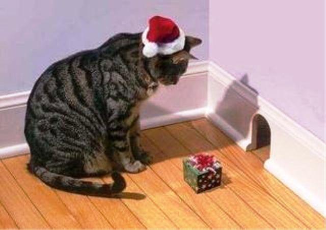 Новогодних котиков пост! И немного о безопасности питомцев в праздники