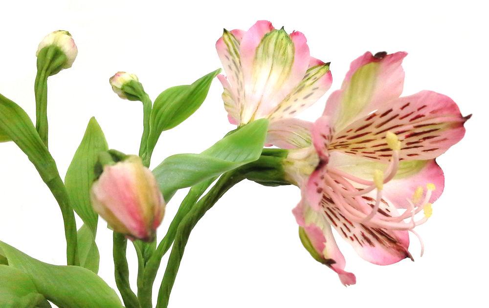 лепка реалистичных цветов