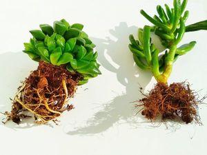 Что делать, если растения не здоровы. Ярмарка Мастеров - ручная работа, handmade.
