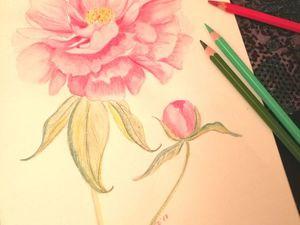 Нежный розовый пион акварельными карандашами   Ярмарка Мастеров - ручная работа, handmade