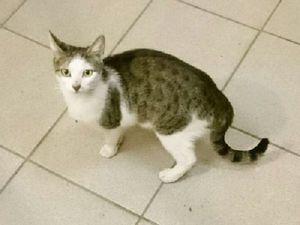 Ищем старых или новых хозяев для кошки!. Ярмарка Мастеров - ручная работа, handmade.