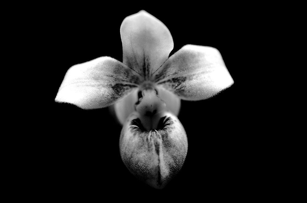цветы, интересно