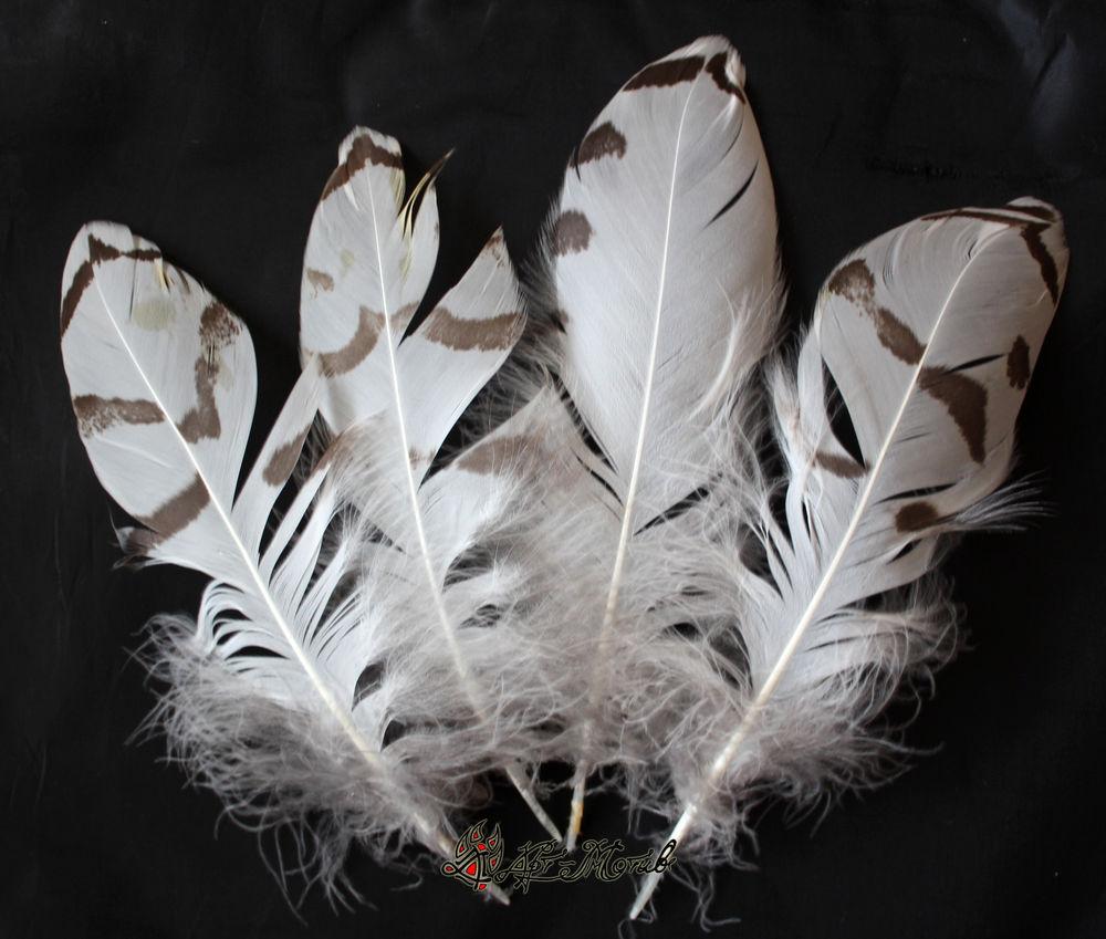 перья, перья для декора, сова, совушка, белые перья, перья москва, белая сова