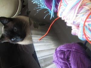 Кошки и мандалы. Ярмарка Мастеров - ручная работа, handmade.