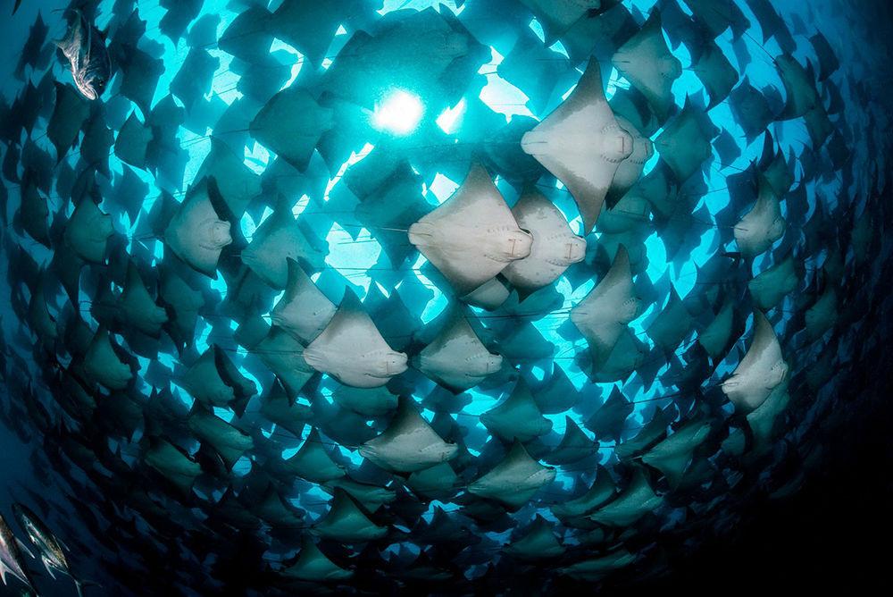 22 лучших фото подводного мира: победители конкурса Ocean Art 2018