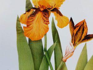 «Весна моих цветов»: уникальные работы аэрографик-ботаниста Ольги Макрушенко. Ярмарка Мастеров - ручная работа, handmade.