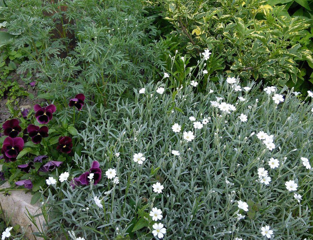 сад, летние цветы