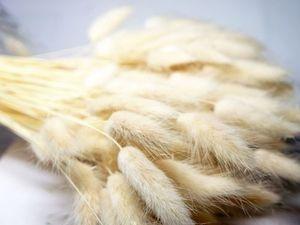 Лагурус белый в наличии. Ярмарка Мастеров - ручная работа, handmade.