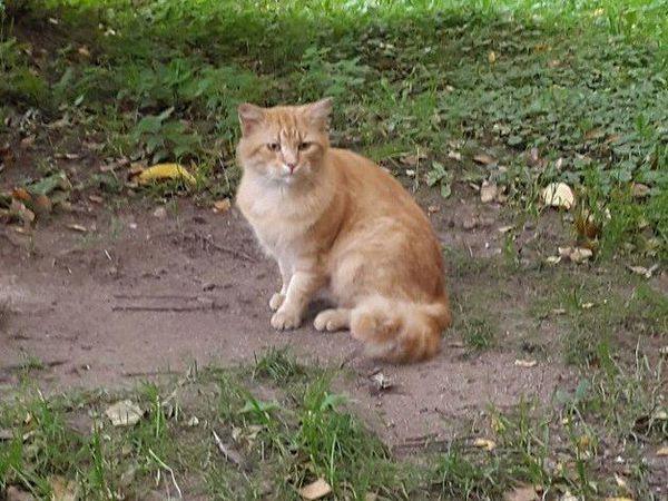 Если, вдруг, кому-то не хватает рыжего кота | Ярмарка Мастеров - ручная работа, handmade