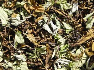 Новинка! Иван-чай с мятой и земляничным листом. Ярмарка Мастеров - ручная работа, handmade.
