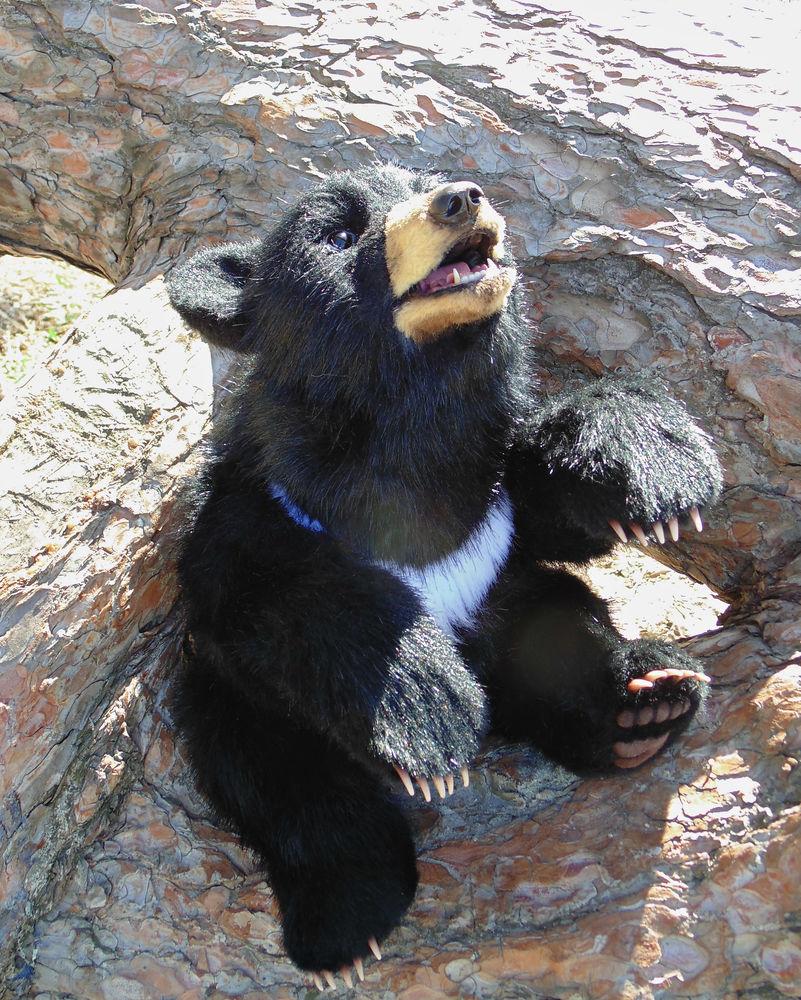 меховый медведь