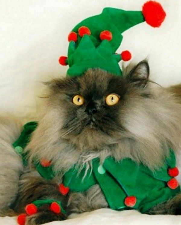 Christmas Cats! And a Little About the Safety of Pets During the Holidays, фото № 4