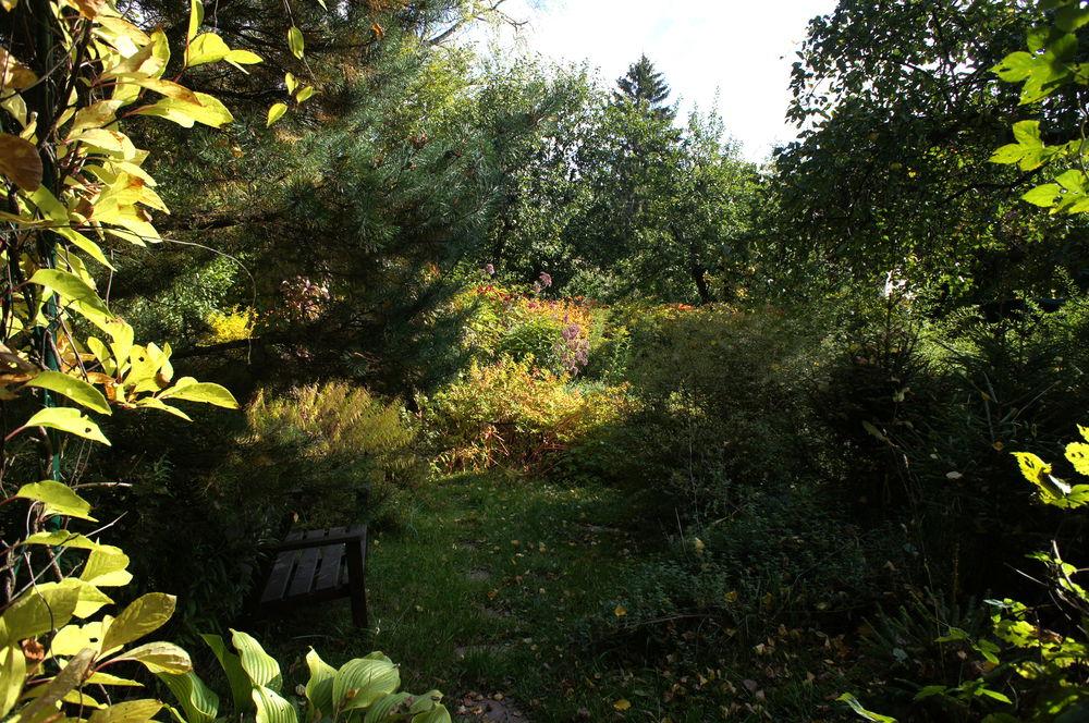 осень в моем саду