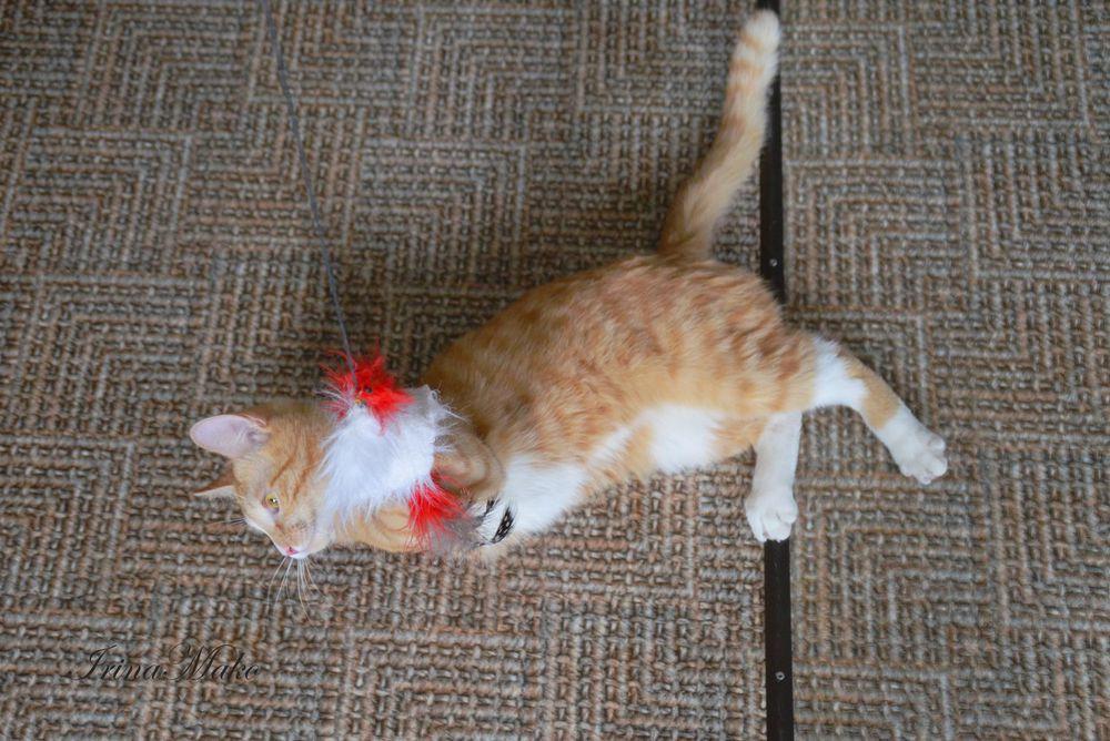 Котячьи поигрушки, фото № 7