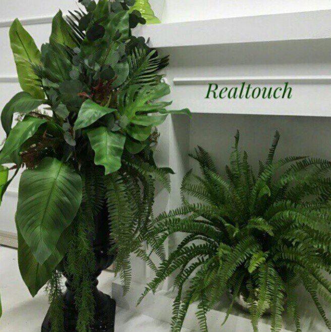 зелень, флорариум