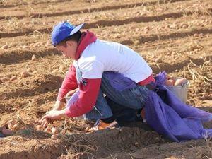 Видео, как Ваня собирает картофель.. Ярмарка Мастеров - ручная работа, handmade.