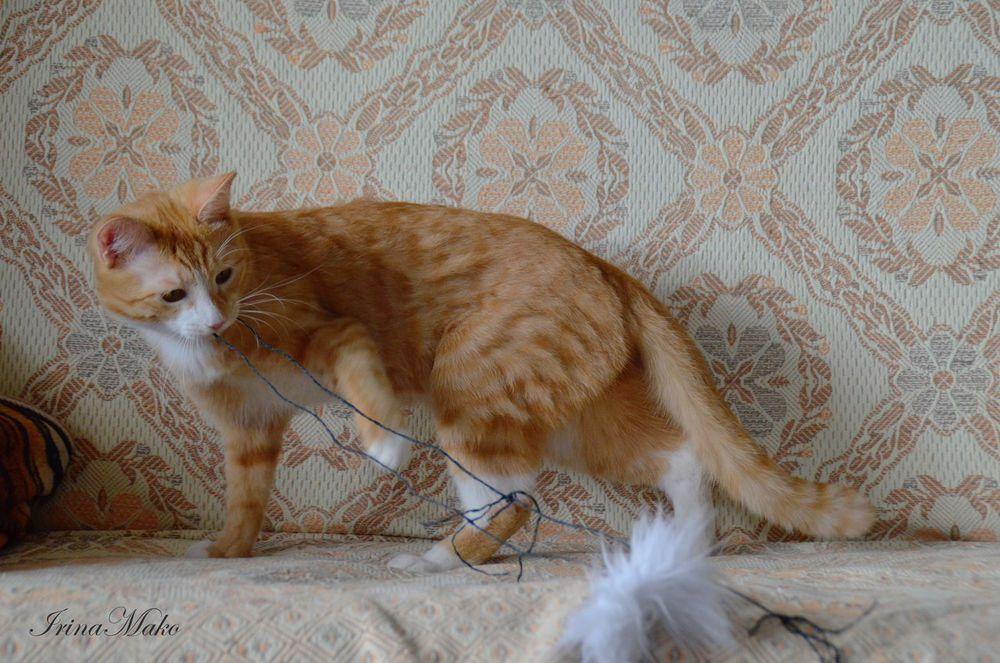 Котячьи поигрушки, фото № 5