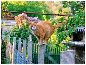 Кошка в доме. Кошачья магия. | Ярмарка Мастеров - ручная работа, handmade