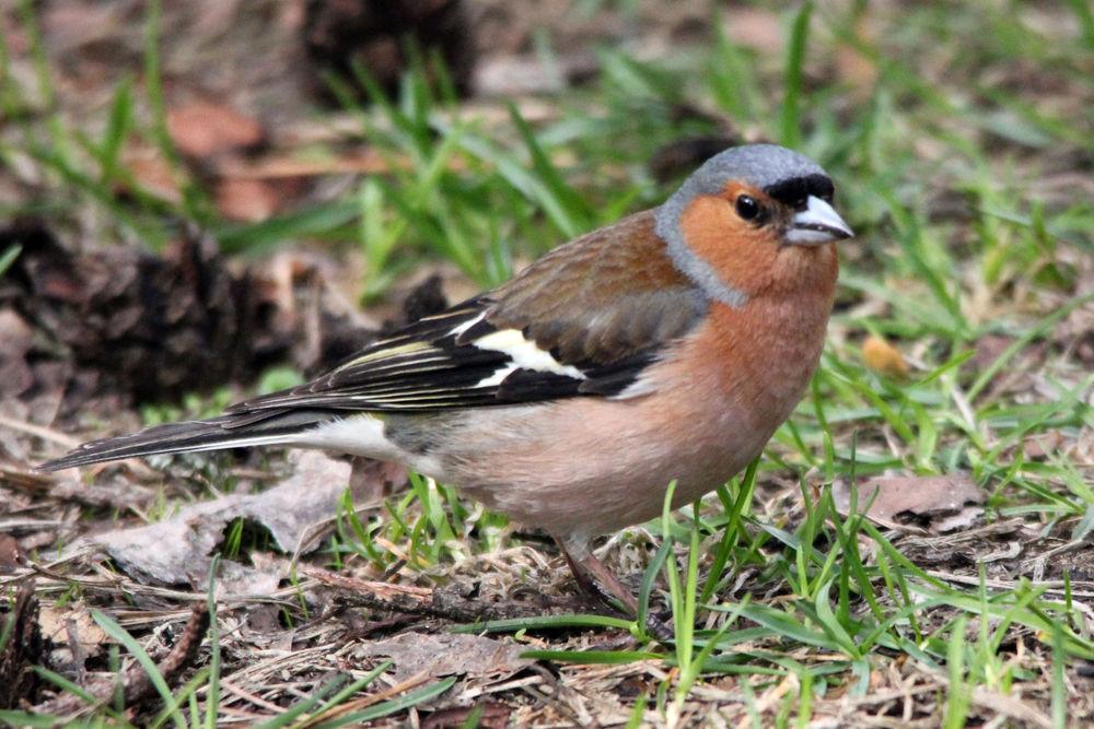 Птицы пензенской области фото с названиями