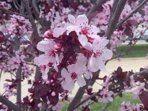 Весна. Весеннего настроения! | Ярмарка Мастеров - ручная работа, handmade