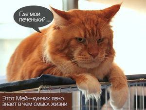 Без кота и жизнь не та...&#x3B;). Ярмарка Мастеров - ручная работа, handmade.